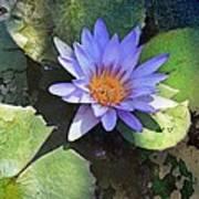 Floral Fascination Poster