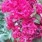 Floral Fever  Poster