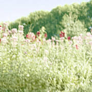 Floral Impressions Poster