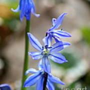 Floral Ladder  Poster
