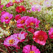 Floral Portulaca Garden Poster