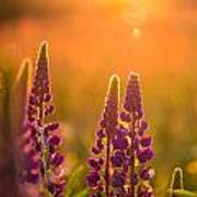 Floral Sunset Poster