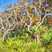 Florida Scrub Oaks Painted  Poster