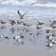 Florida Seabirds Poster