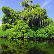 Florida Swamps Poster