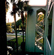 Florida Trees 3 Poster