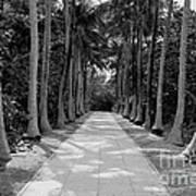 Florida Walkway Black And White Poster