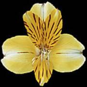 Flower 001 Poster