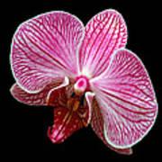 Flower 280 Poster