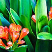 Flower 40 Poster