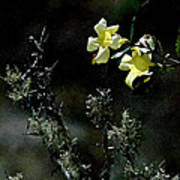Flower Among The Moss Poster