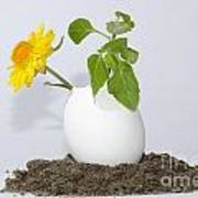 Flower And Egg Poster