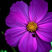 Flower Bug- Viator's Agonism Poster by Vijinder Singh