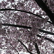 Flower Canopy And Sky Poster