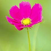 Flower - Closeup Poster