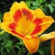 Flower Garden 05 Poster