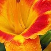 Flower Garden 06 Poster