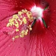Flower Garden 17 Poster