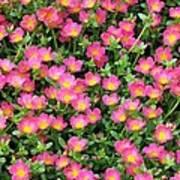 Flower Garden 36 Poster
