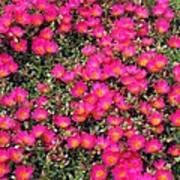 Flower Garden 39 Poster