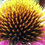 Flower Garden 49 Poster