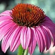 Flower Garden 50 Poster