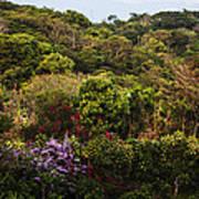 Flower Garden On A Hill Poster