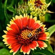 Flower Garden Poster