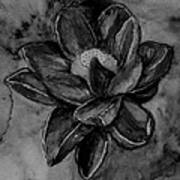 Flower In Black And White Poster