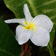 Flower In The Rain Poster