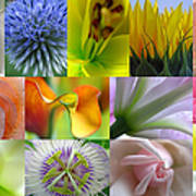Flower Macro Photography Poster