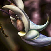Flower Of A Jade Vine Poster by Julie Palencia