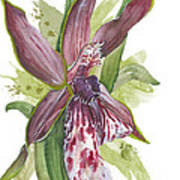 Flower Orchid 10 Elena Yakubovich Poster by Elena Yakubovich