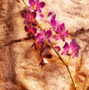 Flower - Orchid - Just Splendid Poster