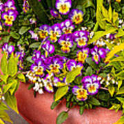 Flower - Pansy - Purple Posies  Poster