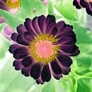 Flower Power 1435 Poster