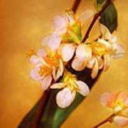 Flower - Sakura - A Touch Of Spring Poster