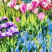 Flower Splash I Poster