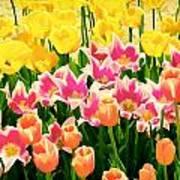 Flower Splash Ix Poster