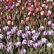 Flower Splash Vi Poster