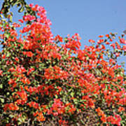 flower wall in Madagascar Poster