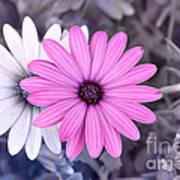Flower15 Poster