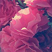 Flowering Blossoms Poster