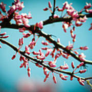 Flowering Branches Poster
