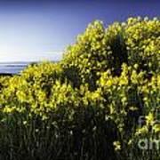 Flowering Bush Poster