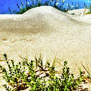 Flowering Dunes - Outer Banks Poster by Dan Carmichael