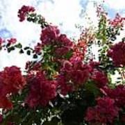Flowering Skyward Poster