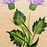 Flowering Thistle Poster