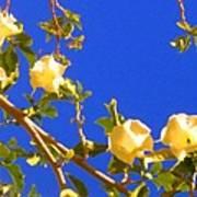 Flowering Tree 1 Poster