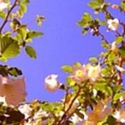 Flowering Tree 2 Poster